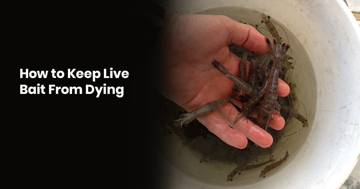 How To Keep Live Bait From Dying – Tips For Fishing With Live Bait