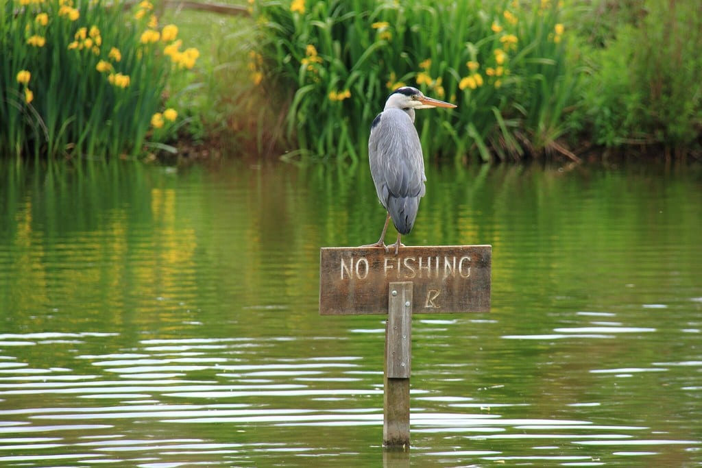 Can you fish at any pond?