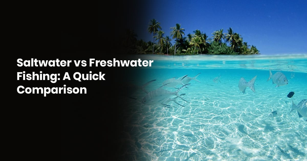 Saltwater Vs. Freshwater Fishing A Quick Comparison