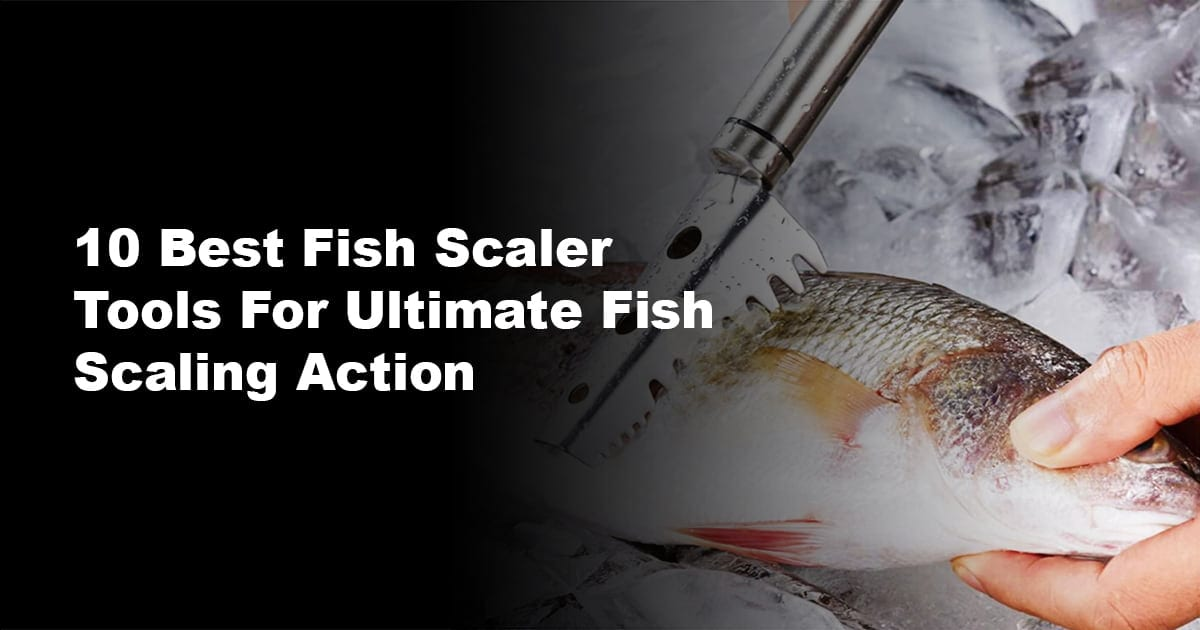 10 Best Fish Scaler Tools For Ultimate Fish Scaling Action