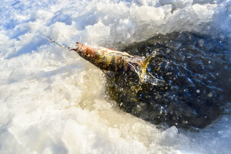Winter Fishing with Ice Fishing Sonar – All You Need to Know 2